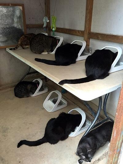 シュアーフィーダーマイクロチップを7匹の猫で使っている人も