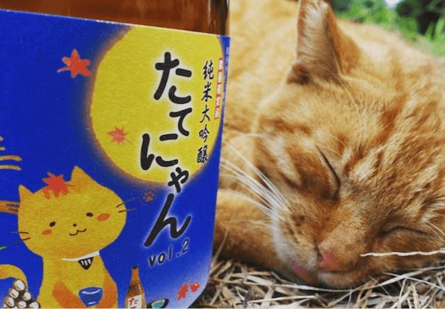 第1回たてにゃんフォトコンテスト、日本酒と猫の写真を募集中