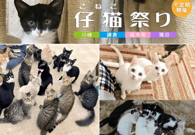 譲渡型猫カフェにゃんくる、4店舗同時に「仔猫まつり」を開催中
