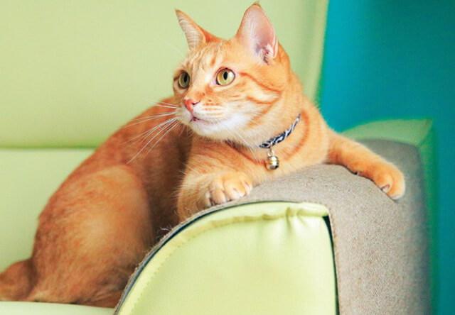 フェリシモ猫部、ソファや椅子をカバーする爪とぎシートを発売