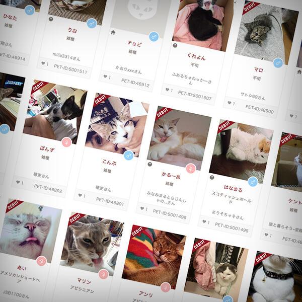 ペットプロフに登録されている猫や犬のイメージ