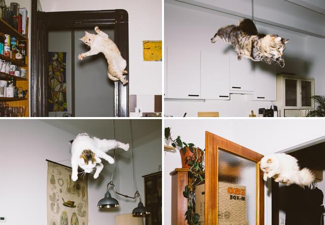 ジャンプ猫の写真、Jumping Cats(ジャンピング キャッツ)
