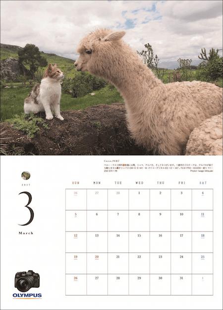 アサヒカメラの特別付録「猫にまた旅2017」の3月の猫写真