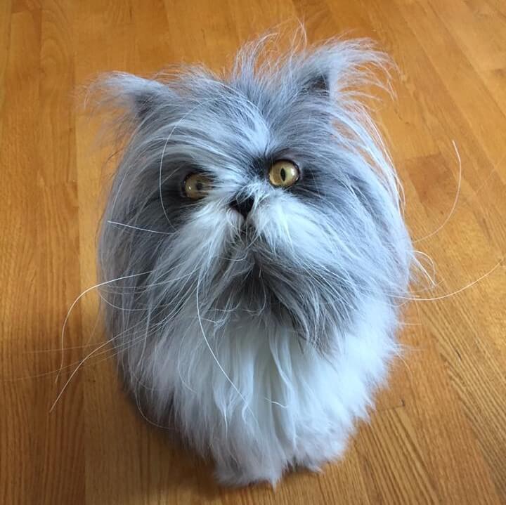 犬か猫か分からないと話題の猫、アチョム(Atchoum)くん