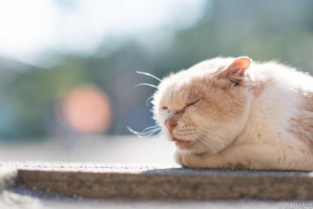写真集「気ままに猫だもん。」に登場する眠っているネコ