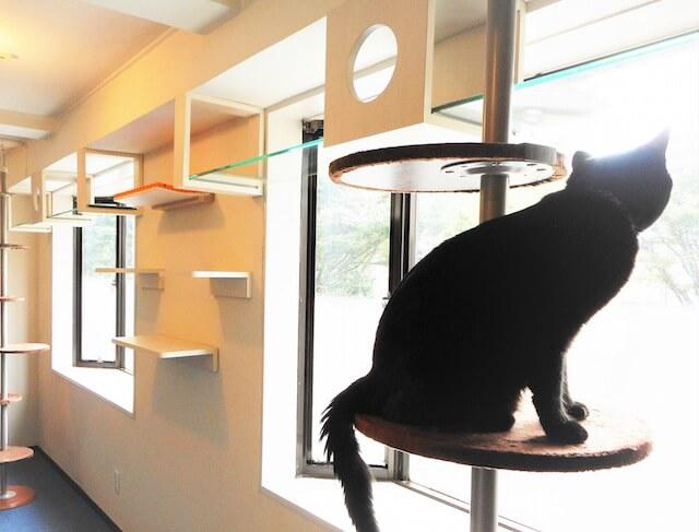猫用フリースペースのキャットステップ