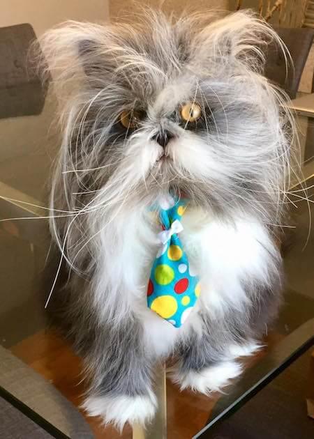 毛が乱れていると更に犬に似ている猫のアチョム(Atchoum)くん