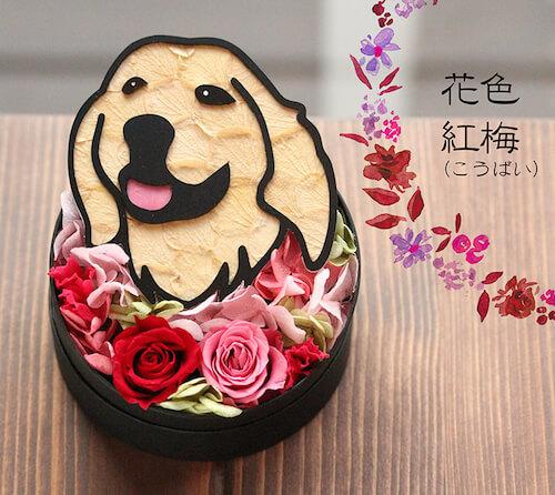 紅梅×ゴールデンレトリバーのプリザーブドフラワー「Animal Candy」
