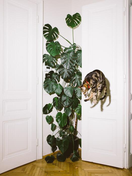Daniel Gebhart de Koekkoek撮影、垂直ジャンプ猫