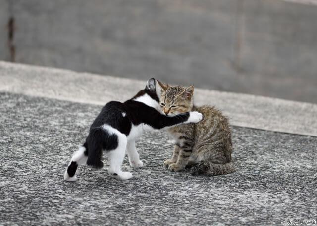 写真集「気ままに猫だもん。」に登場する寄り添い合うネコ