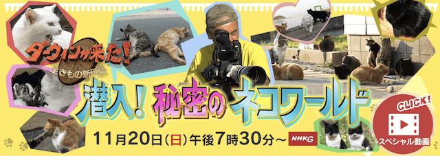 ダーウィンが来た!〜生きもの新伝説〜で放送予定の、猫の大特集「潜入!秘密のネコワールド」