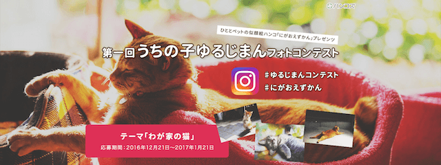 インスタグラムに愛猫の写真を投稿する「第1回 うちの子ゆるじまん フォトコンテスト」