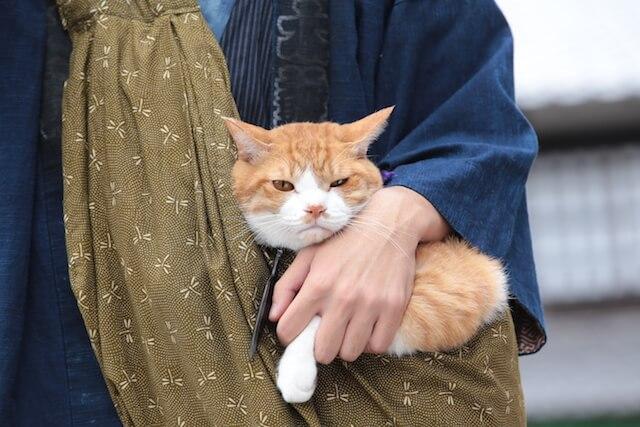 猫忍の主役猫「金時」の忍者写真1