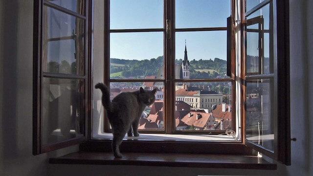 岩合光昭の世界ネコ歩き「チェコ」に登場する猫2