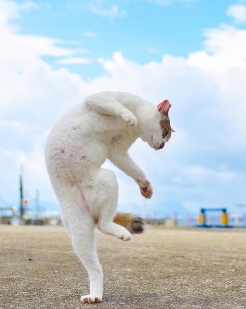 鶴の構えをとる猫(ネコ写真集「のら猫拳」)