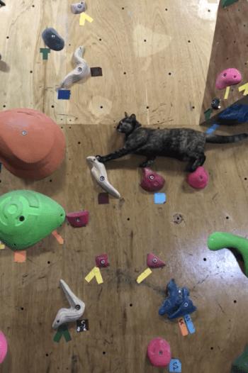 ボルタリングする猫の写真3