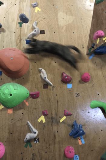 ボルタリング中にジャンプする猫の写真