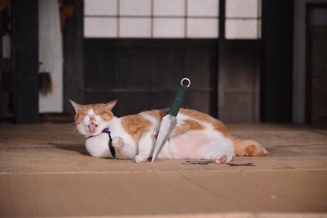猫忍の主役猫「金時」の忍者写真6
