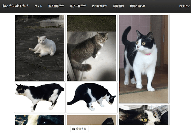 崇城大学と竜之介動物病院が共同開発した、外猫の情報を共有するサービス「ねこでる」