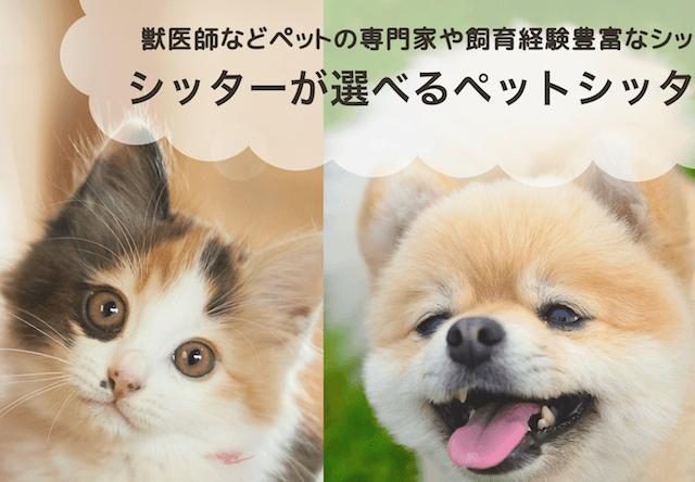 保護猫の飼い主が割引を受けられるペットシッターサービスが登場