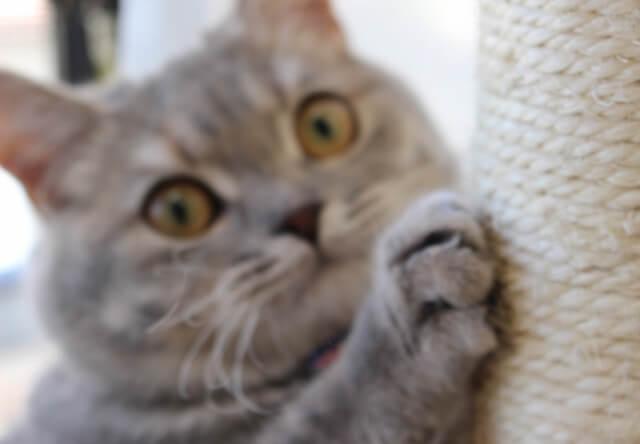 爪をとぐ猫の写真