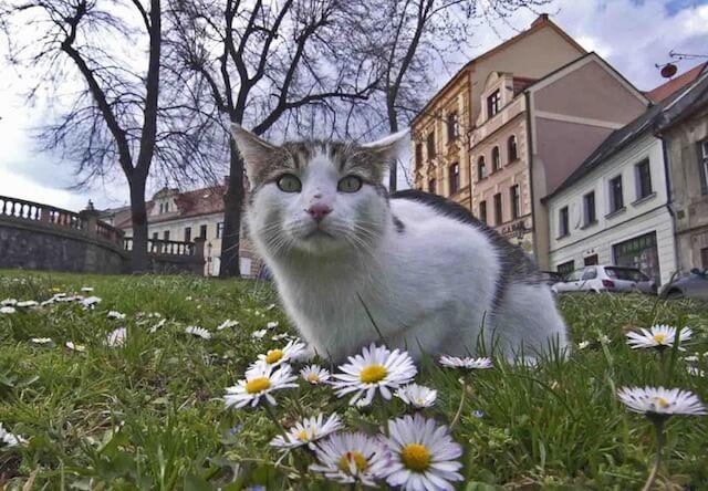 岩合光昭の世界ネコ歩き、12/24放送の新作は「チェコ」