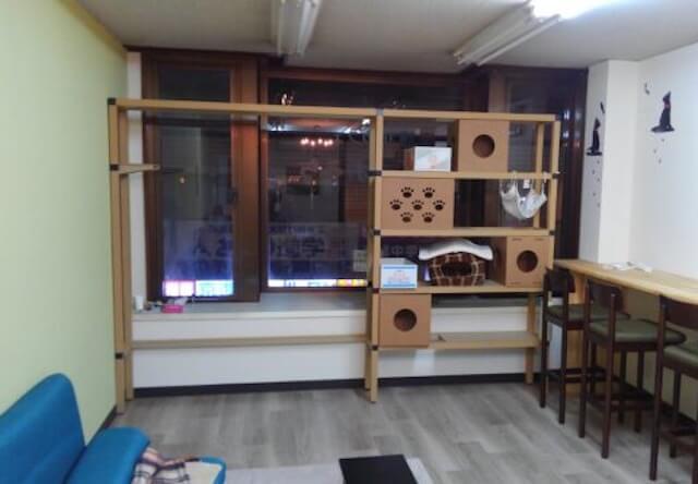滋賀県大津市に初の猫カフェ「ねこのおうち」が新規オープン
