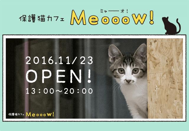 品川区の保護猫カフェ「Meooow!(ミャーーーオ!)」