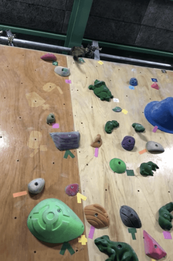 ボルタリングで一番上まで登りきった猫