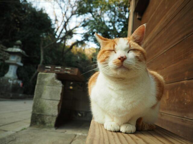 目をつぶる猫の写真