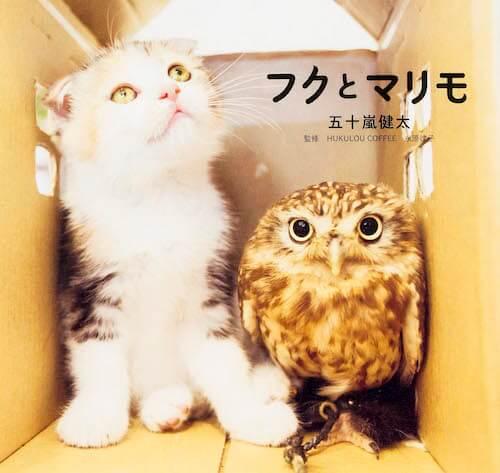 フクロウと猫の仲良しコンビを撮影した「フクとマリモ」