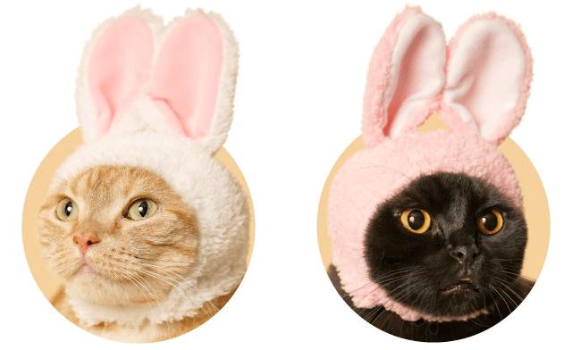 猫をウサギに変身させられる被り物