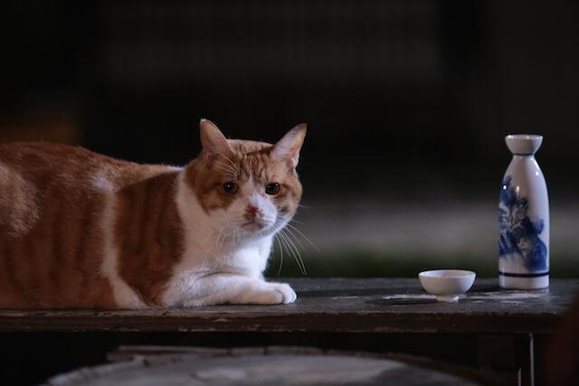 猫忍の主役猫「金時」の忍者写真11