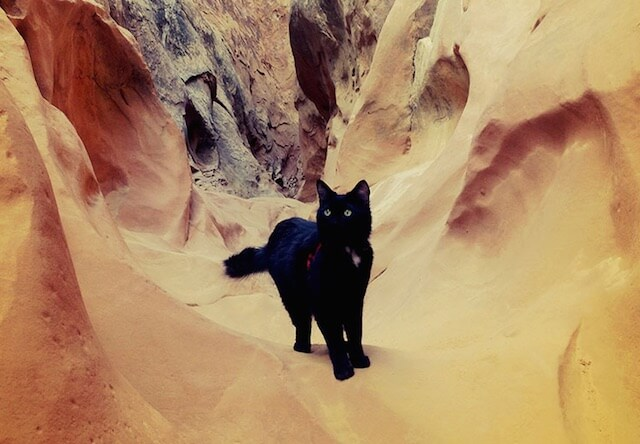 よく岩場に訪れる猫「ミリー」ちゃん
