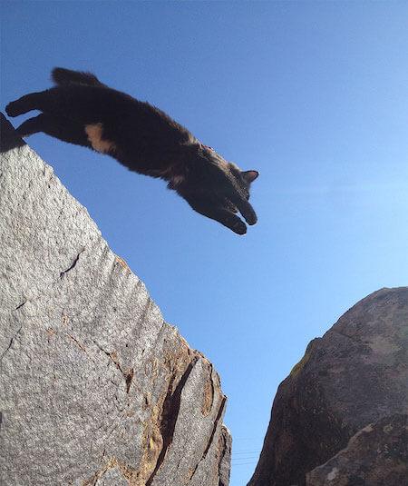 岩場でジャンプする猫