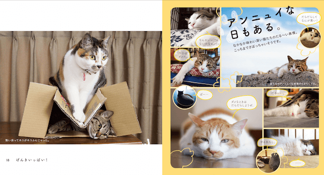 ネコ写真集「なごみ猫 BEST SELECTION(ベストセレクション)」の写真、アンニュイな日もある