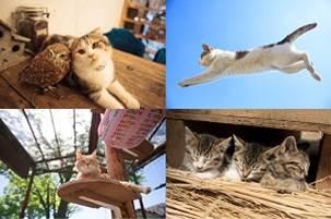 五十嵐健太さんが撮影したネコ写真