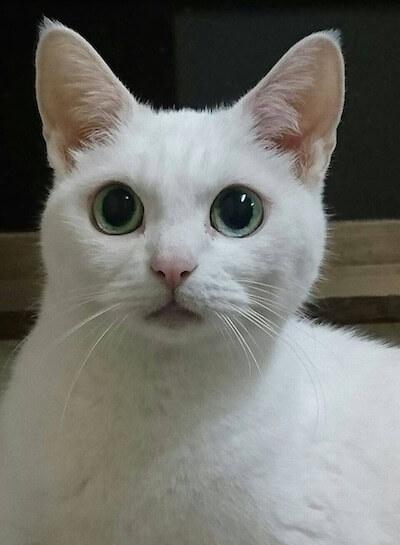 ドラマ猫忍に友情出演する、スター猫のあなご