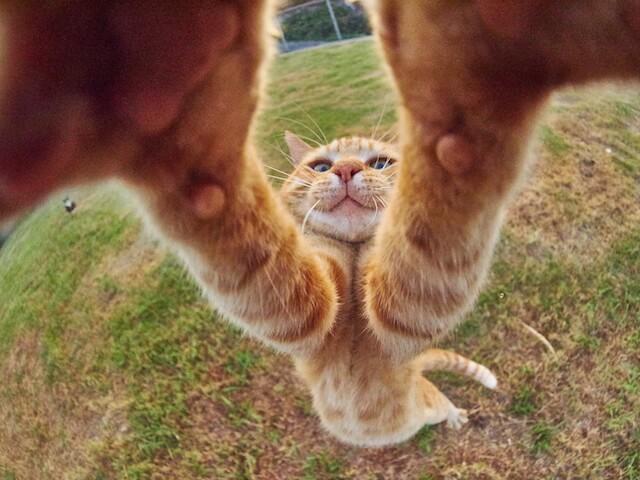両手チョップする猫(ネコ写真集「のら猫拳」)