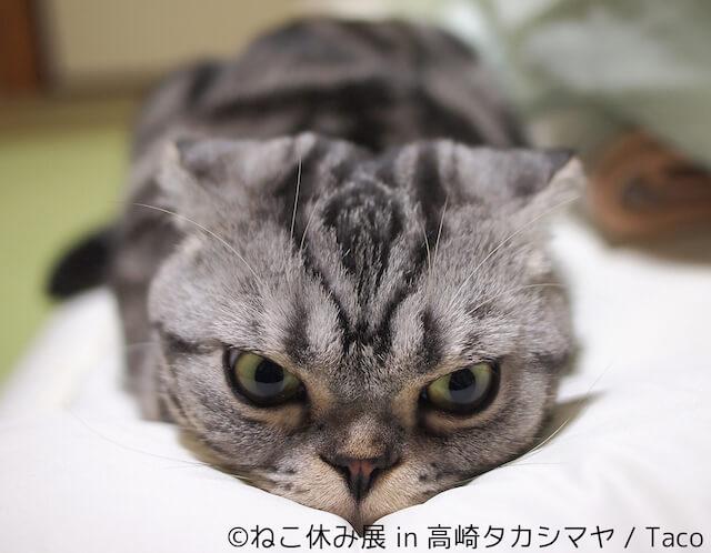 Tacoのネコ写真作品