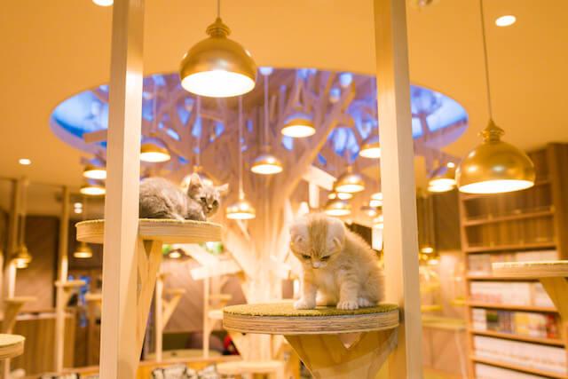 猫カフェ「MoCHA(モカ)」心斎橋店の猫写真3