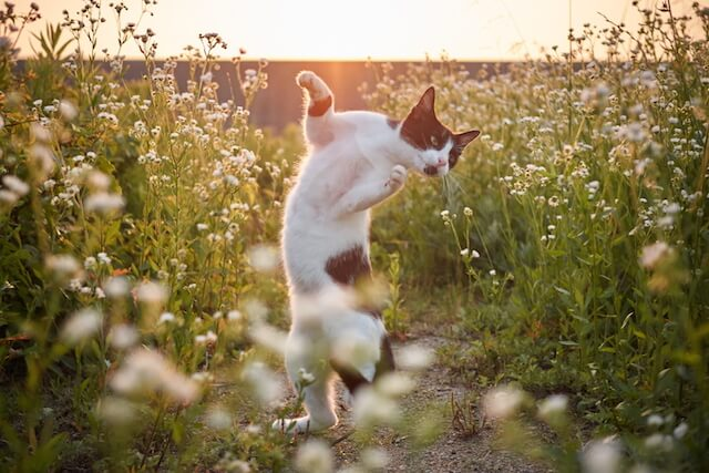 左手に力を込める猫(ネコ写真集「のら猫拳」)