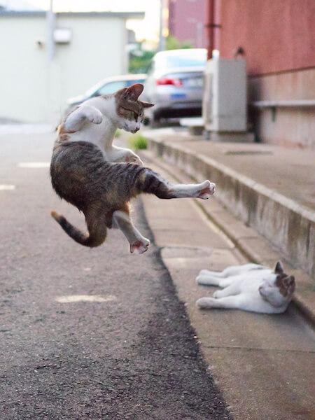寝ている猫に飛び蹴りする猫(ネコ写真集「のら猫拳」)