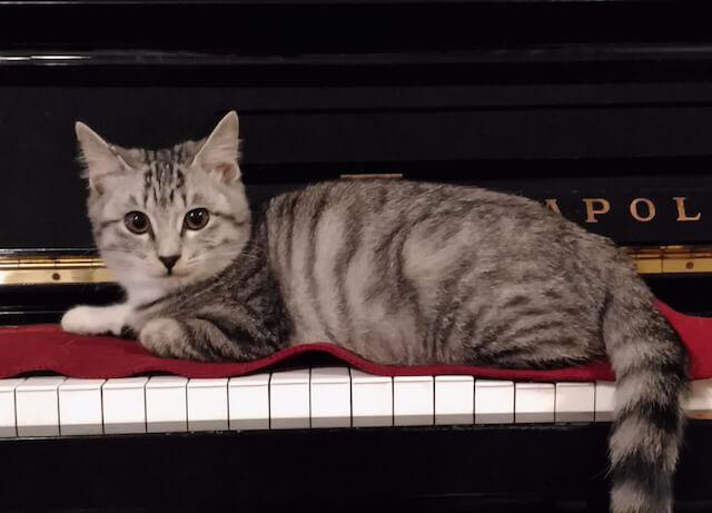 似顔絵のモデル猫