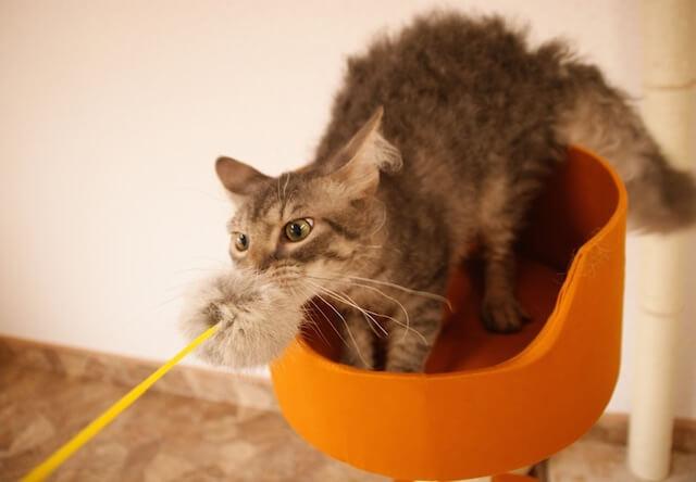 つくばわんわんランドの「ねこハウス」で遊んでいる猫2