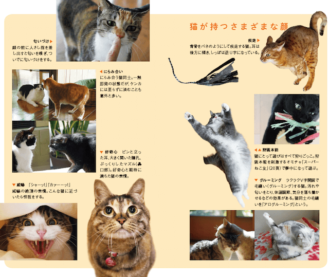 書籍「猫の學校」の中身イメージ1