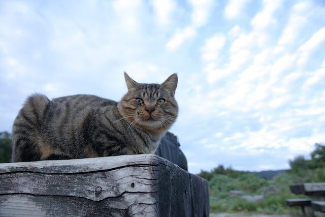 フォトブック「京のにゃんこ」に登場する、くつろぐ猫