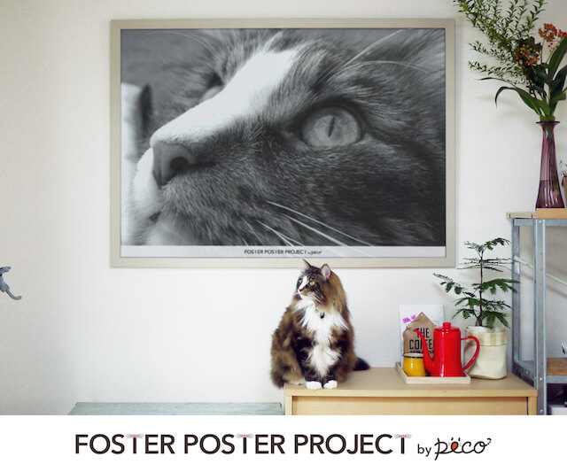 猫写真で作れる特大アートポスター