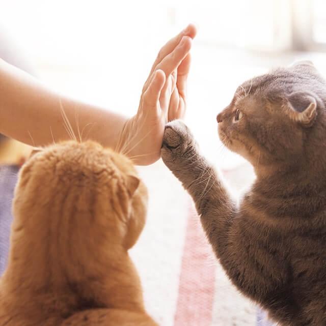 写真集「ねこのおてて」に収録されている猫の手8