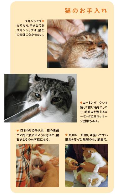 書籍「猫の學校」の中身イメージ2